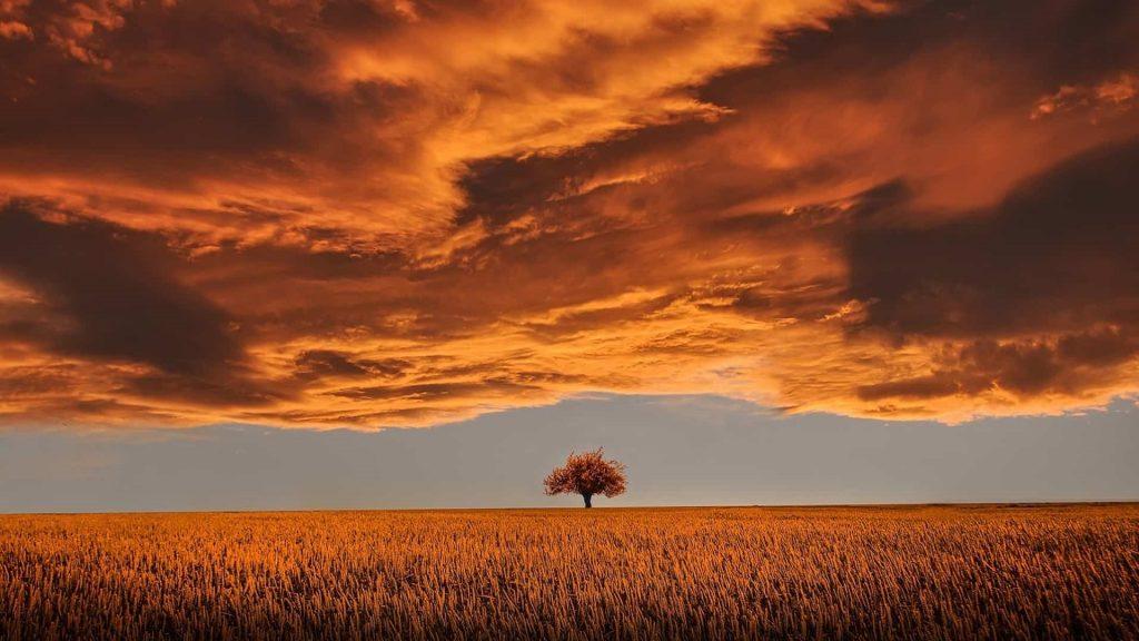 Tree in open plain